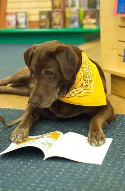 Reading with Rover Therapy Dog
