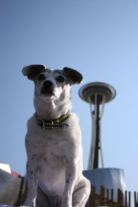 Seattle Dog Events