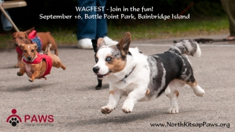WagFest Seattle Dog Fundraising Event