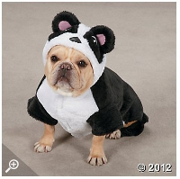 Cute Top Dog Halloween Costumes